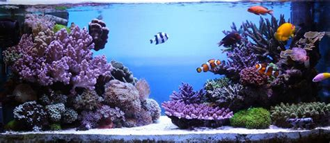saltwater aquascaping ideas on the rocks how to build a saltwater aquarium reefscape my dream pinterest