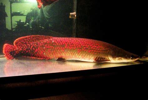 Saltwater Tank Fish – 100 GALLON REEF AQUARIUM EQUIPMENT   YouTube