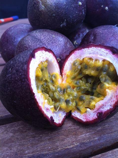 fiore della passione significato passiflora maracuj 224 granadilla e