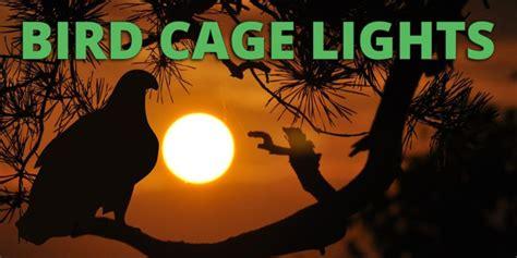 avian l for birds avian spectrum lighting size of lights59