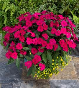 sunpatiens colors best flowering annuals for sun and shade annual flowers