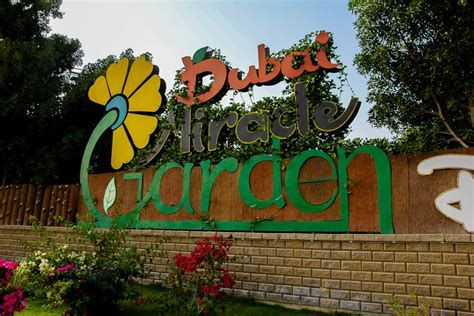 visiting  dubai miracle garden  pictures thatll