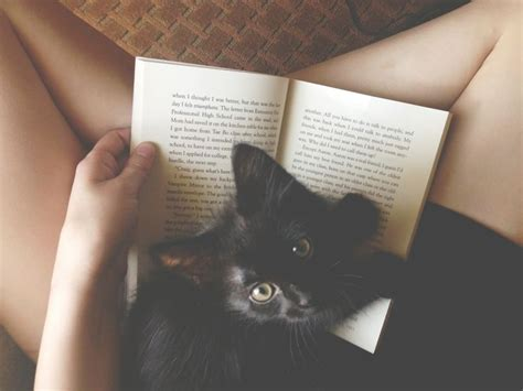 how to live like your cat books tea coffee and books books cats