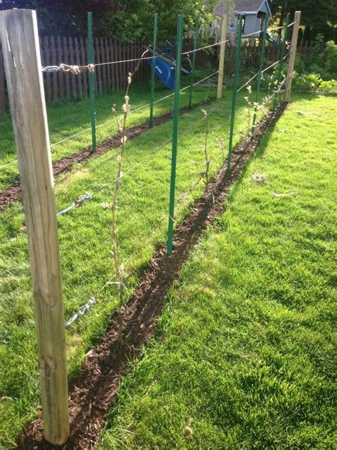 backyard grape vine trellis 17 best images about grape trellis ideas on pinterest