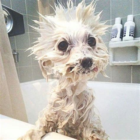 make bathtime fun for your dog make bathtime fun with dog bath time funnies cute funny dog pics
