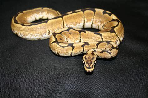 concatenate list items into string python