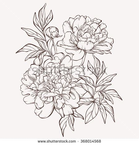 Line Flower vector peony flower isolated on white background element