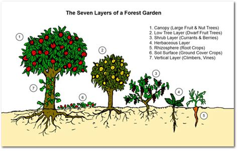 why food forests