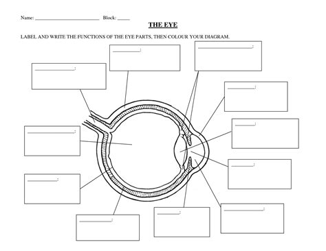 label diagram worksheet label diagram worksheet 28 images plant labeling