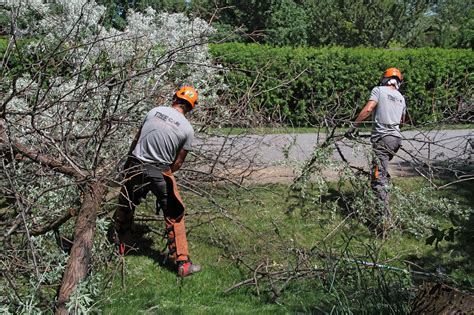 Images Of Christmas Trees tree care solutions bozeman mt