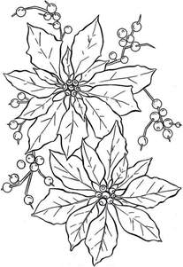 beautiful poinsettia flower coloring page color luna