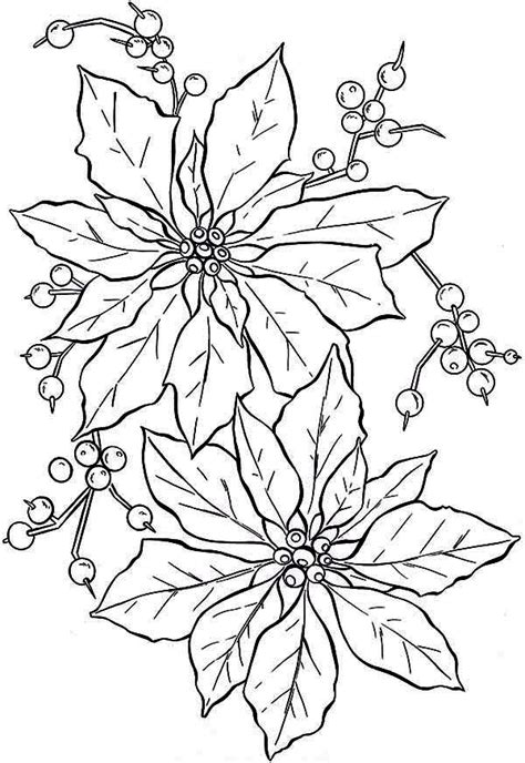Poinsettia Flower Beautiful Poinsettia Flower Flower Poinsettia Coloring Page