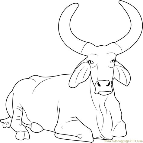 Beautiful Bull Coloring Page Free Bull Coloring Pages Bull Coloring Pages