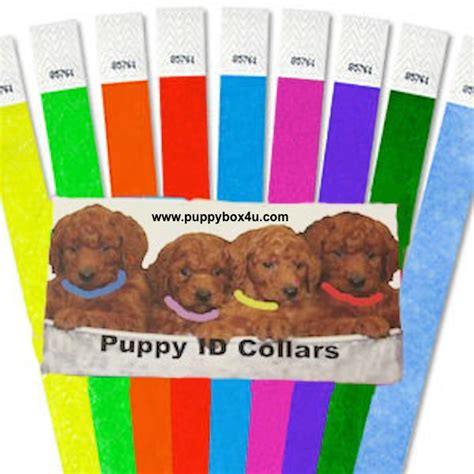 puppy id collars hershey thumbnail