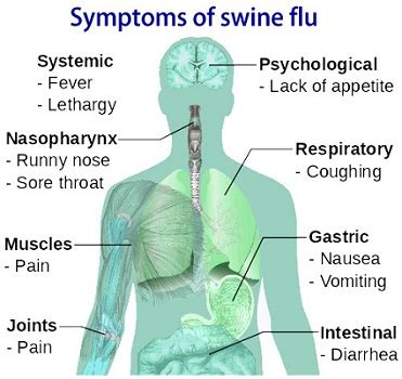 Flu Like Symptoms While Detoxing by Swine Flu Symptoms Precautions Prevention Treatment And