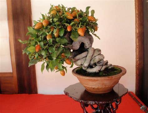 bonsai da fiore alberi bonsai da fiore bonsai empire
