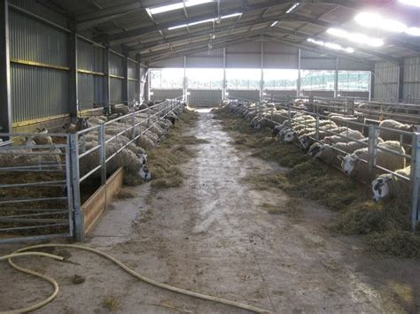 Sheep Lambing Sheds by Small Sheep Barn Plans Chellsia