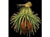 libro fruit edible inedible incredible fruit edible inedible incredible ual research online