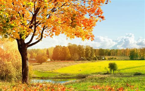 fall landscaping scenery wallpaper 2560x1600 53610