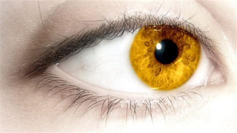 gold eye color international fashion golden eye
