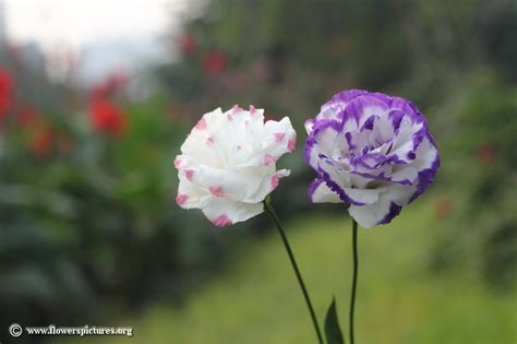 How To Replace Kitchen Sink Faucet flowers pictures 28 images delphinium picture 15