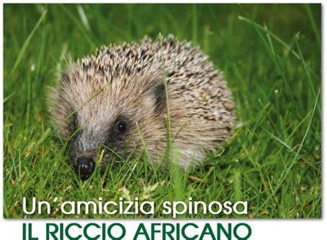riccio africano alimentazione il riccio africano