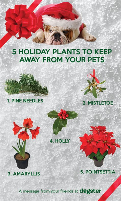 5 poisonous plants that can ruin your dog s holiday season