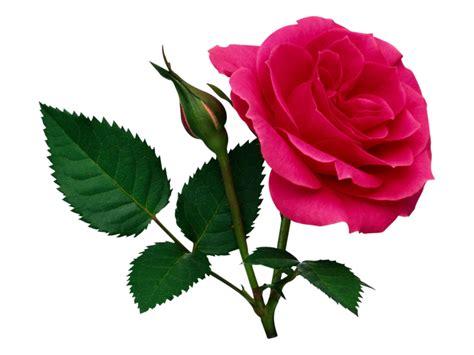 E M O R Y Fleurs 17emo122 fleur