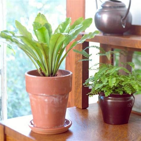Pflanzen Die Nicht Viel Licht Brauchen 4316 by Welche Zimmerpflanzen Brauchen Wenig Licht