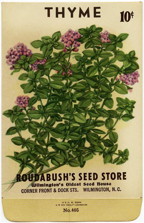 vintage image thyme seed packet  design shop blog
