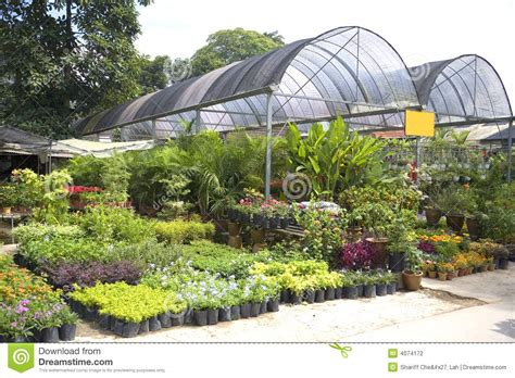 plant nursery layout design tropical plant nursery stock photo image of blossom