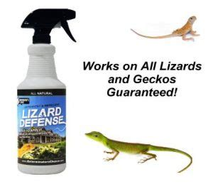 how to get rid of lizards in the house how to get rid of a lizards lorecentral