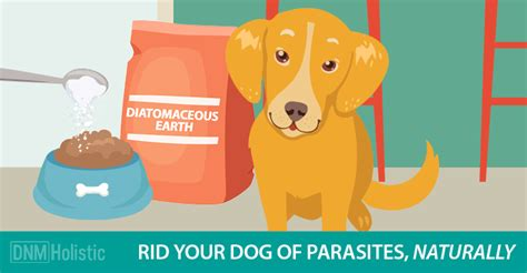 diatomaceous earth for dogs diatomaceous earth get rid of fleas ticks naturally