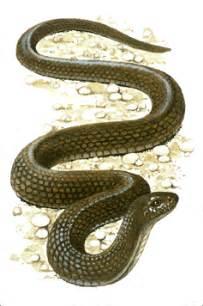 Garden Snake Xword 1l Thriving In School
