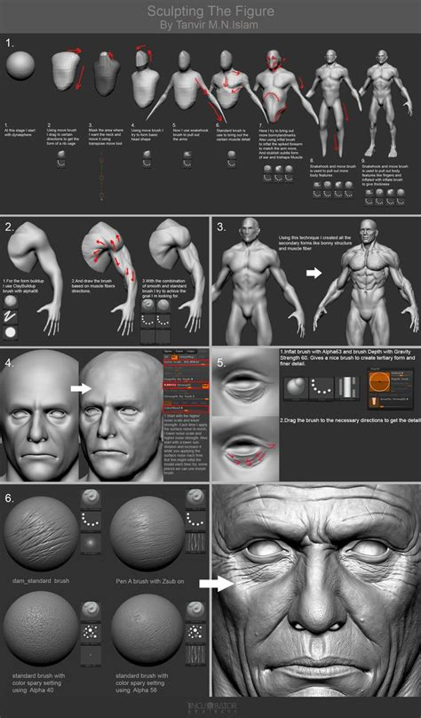 zbrush anatomy tutorial http www zbrushcentral com showthread php 196556