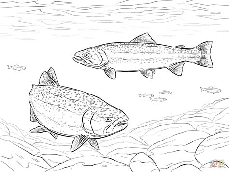 rainbow trouts coloring page free printable coloring pages