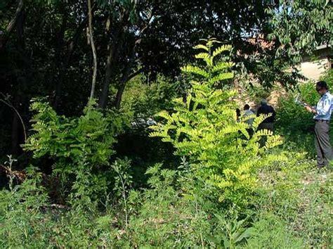 parchi e giardini bologna parchi e giardini consiglio comunale rete civica iperbole