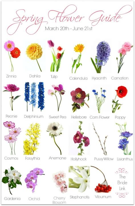 different types of flowers with pictures and their names