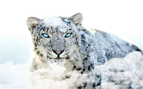 wallpaper for mac os x snow leopard top 10 mac os x lion wallpapers for free download