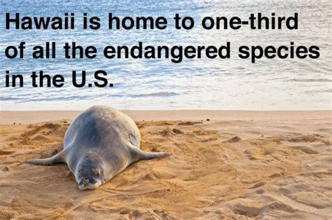 20 little known fun facts about hawaii