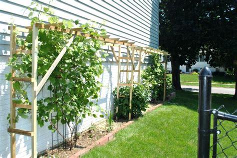 backyard grape trellis nepinetwork org