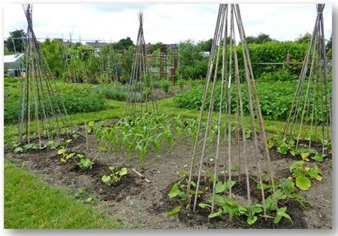 S Corn Growing Up Set growing sweet corn