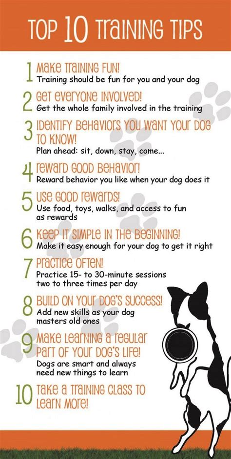 what are service dogs trained to do best 25 therapy ideas on therapy dogs service