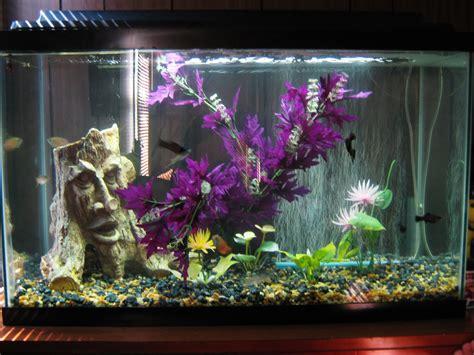 betta tank betta fish tank mates 3 gallon betta fishies on