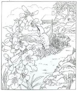 coloring book hummingbird detailed realistic hummingbird coloring page for