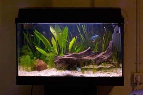 Aquarium Inrichting Ideeen by Het Aquarium Inrichten