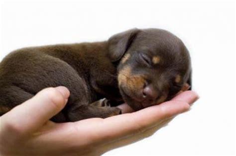 baby puppy names unique puppy names