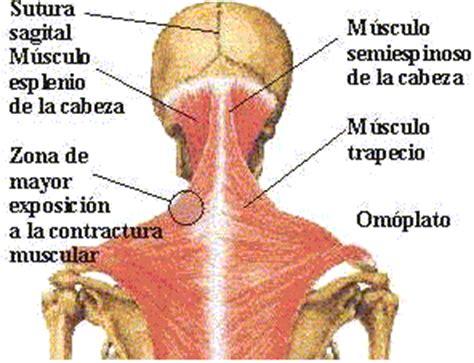 nudo muscular espalda contractura muscular fisiolvera