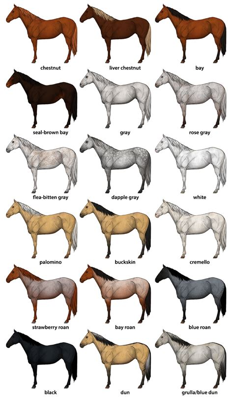 color of horses how to draw horses step by step