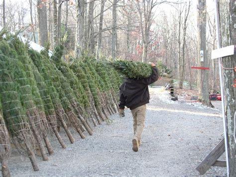 christmas tree farm sussex indian ridge farms tree farm christmastreefarms net